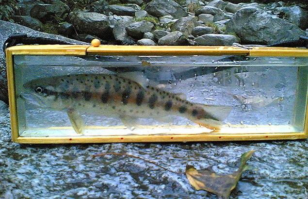 2007.10.12.水の木沢_2
