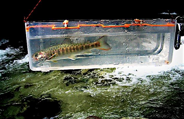 2008.6.30.水の木沢_1