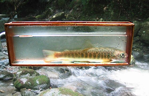 2008.7.29.水の木沢_2